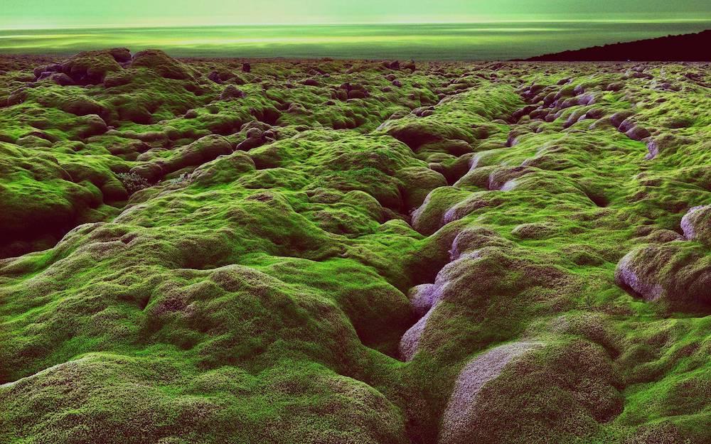 Moss rocks Iceland