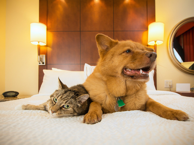 Best pet friendly luxury resorts in the u s for Pet friendly luxury hotels