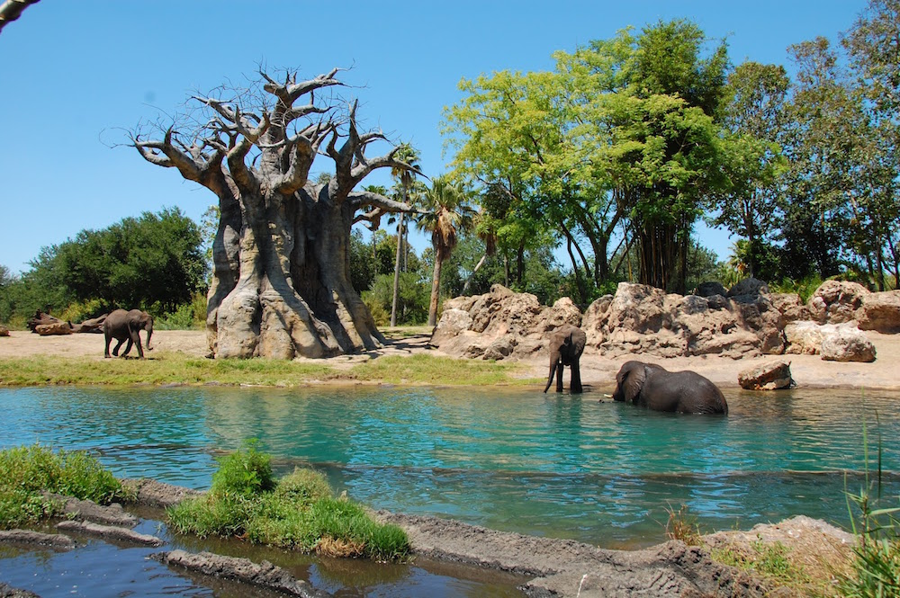 Disney's Animal Kingdom best attractions